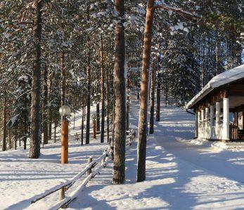 Metsäkartano talvella.