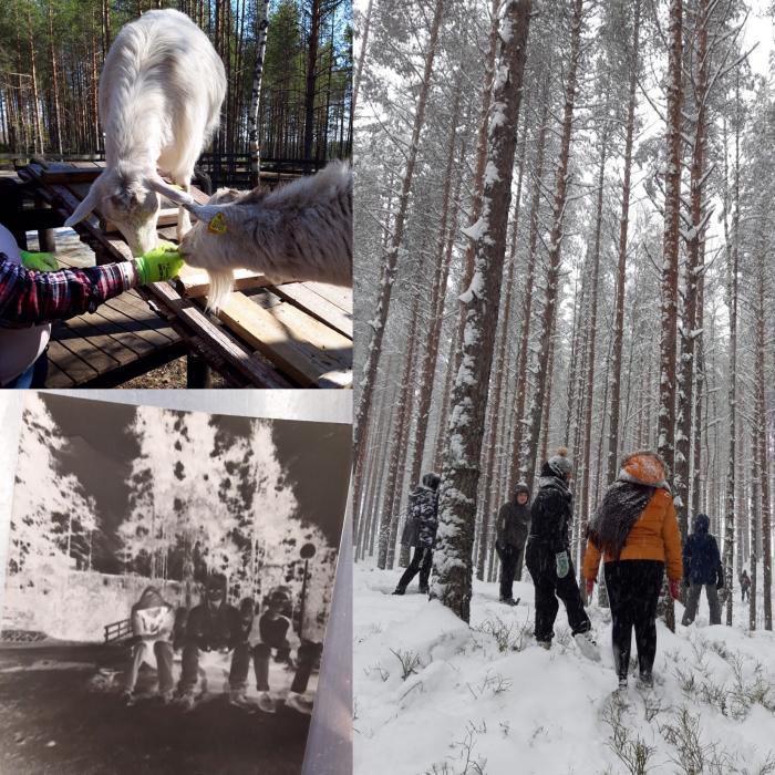 Nuotta-leirillä Piispalassa vuohia, nuoria ja nuoria lumisessa metsässä